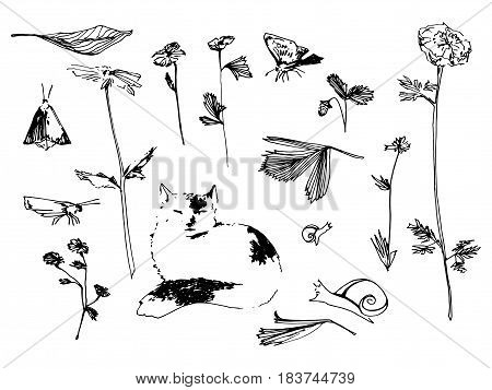 Garden set. Flower butterfly and snail sketch illustration. Hand drawn black contour. Vector image.