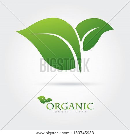 Green icon of the two leaves. It can be used for eco, vegan, herbal, health or care for the nature of the logo design concept.