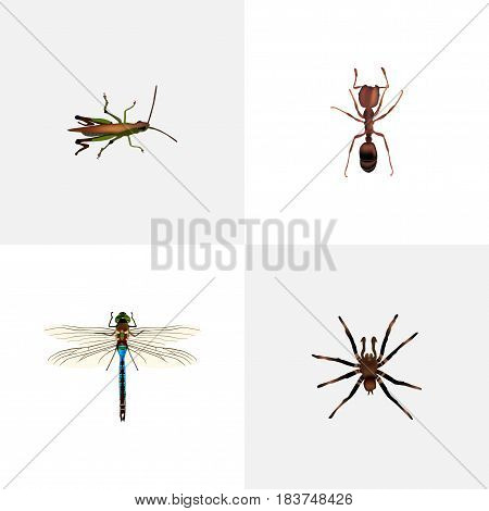 Realistic Damselfly, Arachnid, Locust And Other Vector Elements. Set Of Bug Realistic Symbols Also Includes Bug, Tarantula, Emmet Objects.