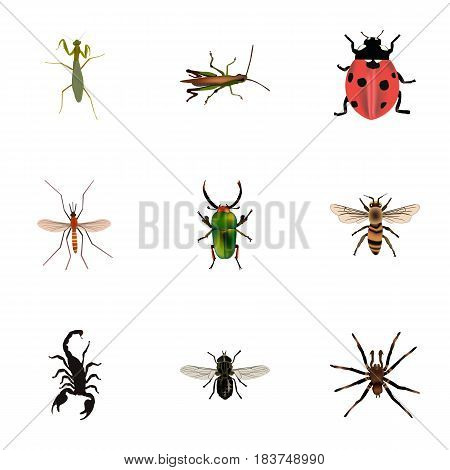 Realistic Insect, Wisp, Midge And Other Vector Elements. Set Of Bug Realistic Symbols Also Includes Beetle, Insect, Mosquito Objects.