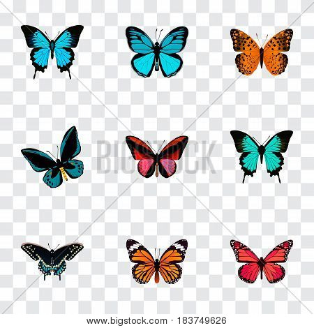 Realistic Morpho Hecuba, Azure Peacock, Demophoon And Other Vector Elements. Set Of Beautiful Realistic Symbols Also Includes Fly, Butterfly, Hairstreak Objects.