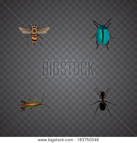 Realistic Ant, Bug, Locust And Other Vector Elements. Set Of Animal Realistic Symbols Also Includes Emmet, Wasp, Grasshopper Objects.