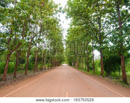 Teak Forest With Rural Road