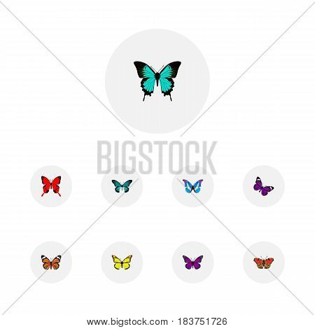 Realistic Monarch, Archippus, Sangaris And Other Vector Elements. Set Of Butterfly Realistic Symbols Also Includes Orange, Brown, Butterfly Objects.