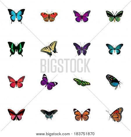 Realistic Green Peacock, Azure Peacock, Purple Monarch And Other Vector Elements. Set Of Beautiful Realistic Symbols Also Includes Green, Purple, Fly Objects.