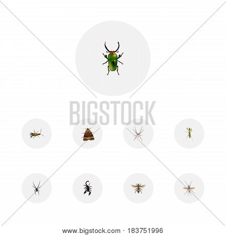 Realistic Poisonous, Insect, Wisp And Other Vector Elements. Set Of Animal Realistic Symbols Also Includes Mosquito, Green, Wisp Objects.