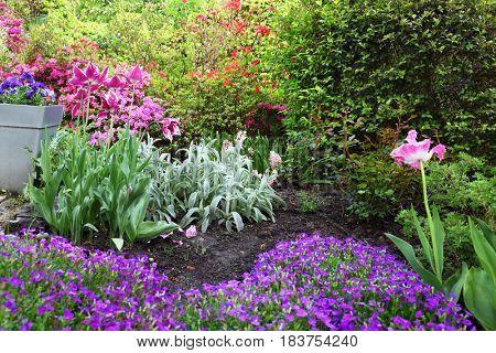 Colourful Flowerbeds  in  Spring  Garden