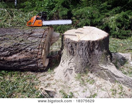 Inactive chainsaw on a big wood