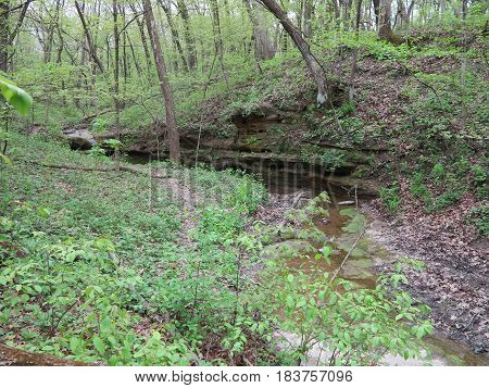 Aurora Canyon with new spring tree and pant growth at Starved Rock State Park