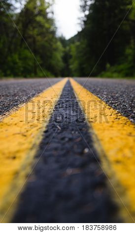 Double yellow lines on a forest highway.