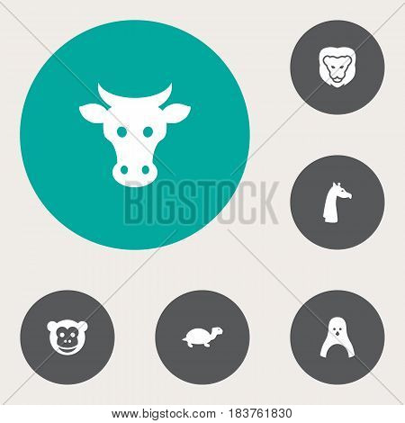Set Of 6 Brute Icons Set.Collection Of Kine, Ape, Camelopard And Other Elements.