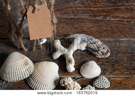 A close up image of several seashells on a driftwood table.