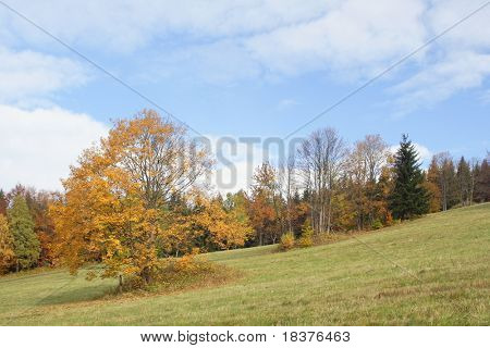 autumn trees on meadow at mountains by name Jesenik at Czech republic