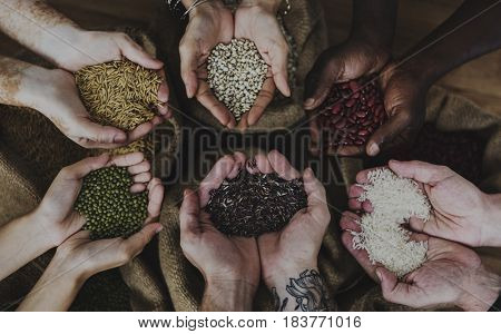 Hands holding grains and photoshooting