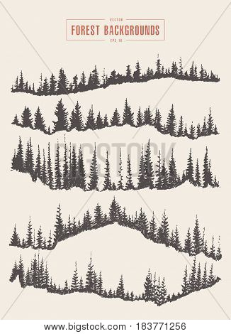 Pine forest background, vector illustration, hand drawn sketch