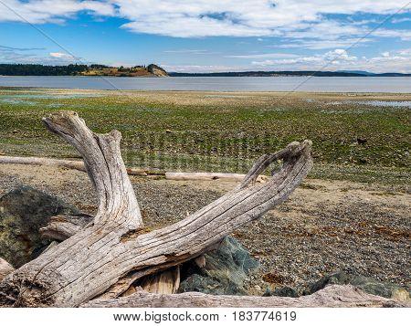 Driftwood strewn on the rocky ocean beach