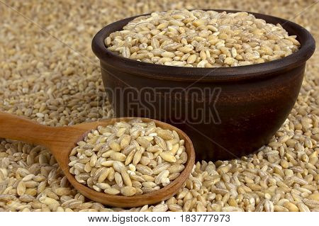 Raw organic pearl barley into a bowl on the background with a wooden spoon