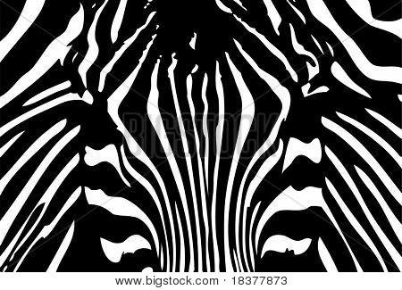 vector - black and white zebra background