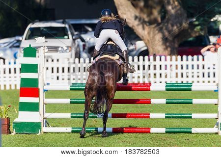 Show Jumping Horse Closeup Headon