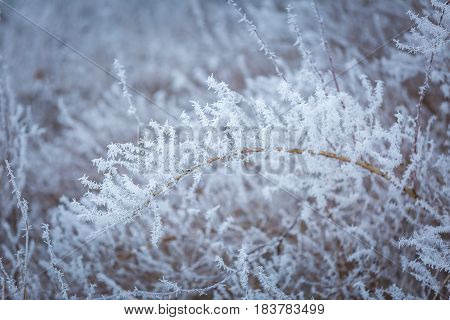 Winter Abstract Macro Of Rime On Plants