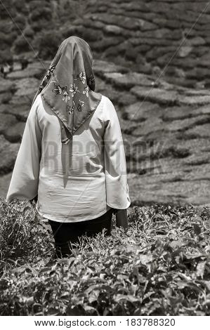 Veiled woman staring at tea plantations on highlands (black and white)