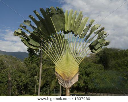 Flat Palmtree