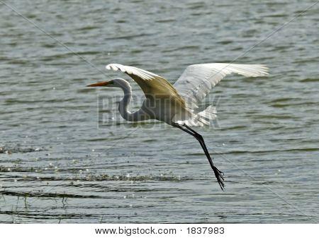 Open Wing Stork