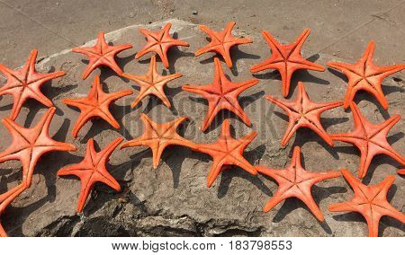 Plenty Of Cushion Starfish