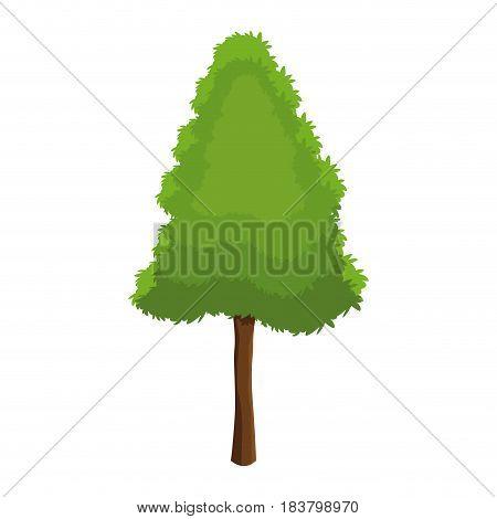 pine tree botanic foliage over white background vector illustration