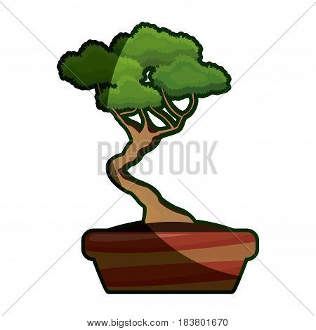 cartoon pot tree bonsai decoration ornament shadow vector illustration
