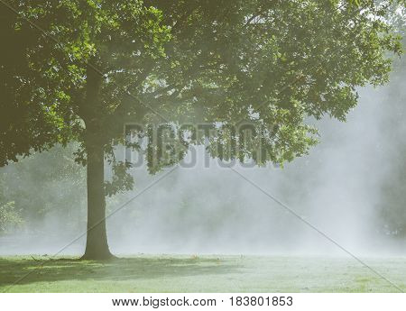 Detail Of A Tree In The Morning Mist Or Fog