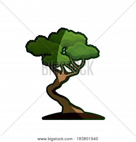cartoon bonsai tree natural foliage image vector illustration