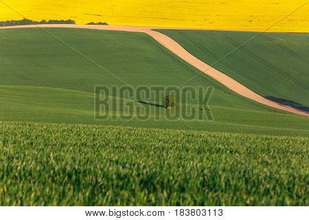 Agricultural land with fresh crops. Large-scale production agribusiness food production concept and textured background with copy space.