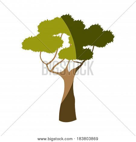 african tree plant natural foliage nature image vector illustration