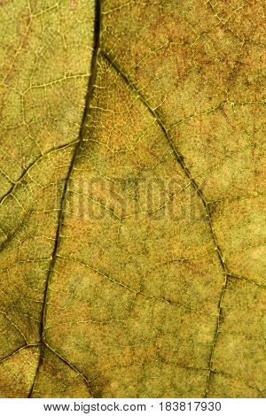 The dry autumn leaf texture close up