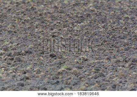 natural fertile brown farmland with fresh grass