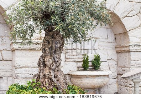 Old greek columns and wall background with stone floor in the garden.