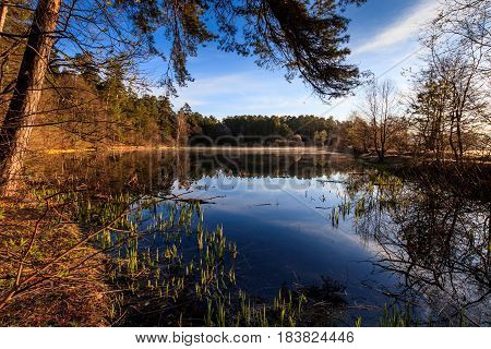 Pond In A Fog And Pine Forest With Reed In Spring Morning.