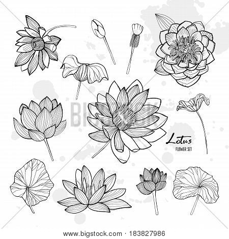 Set of lotus flower in different views. Bloomed, buds and leaves. Hand drawn contour illustrations collection.