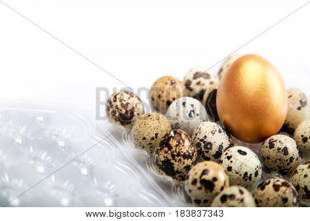 Golden Egg On Quail Eggs In Quail Egg Box Close-up