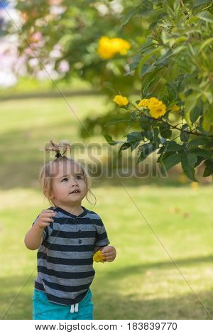 kid fashion healthy environment. cute baby boy small child with long blond hair in blue clothes picking yellow blossoming flowers from bushes on green grass in park on sunny natural background