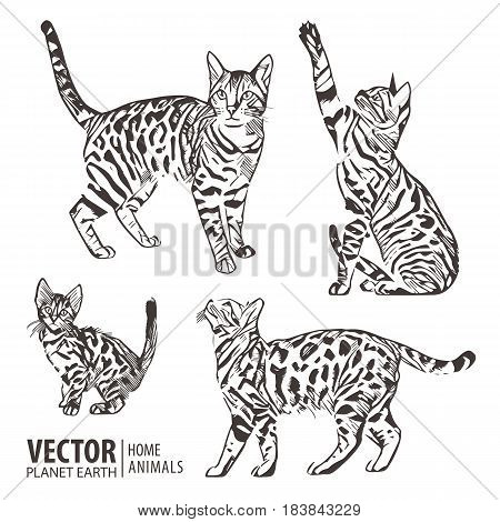 Cats collection-vector silhouette. Cat movement in many positions. Vector illustration