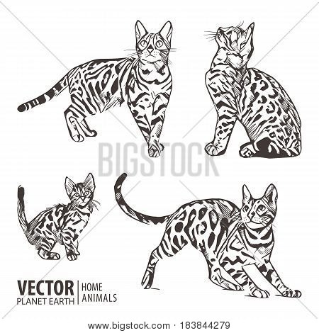 Silhouette cats pattern background. Cat movement in many positions. Vector illustration.