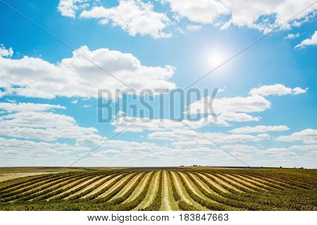Unusual scene of the countryside with white fluffy clouds. A wonderful day in springtime. Location rural place of Ukraine, Europe. Ecological production of natural products. Beauty world.