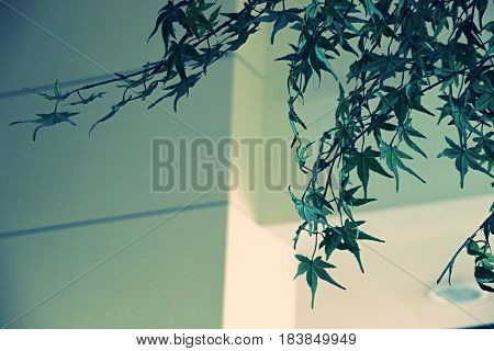Green leaves decoration on white wall interior decoration background