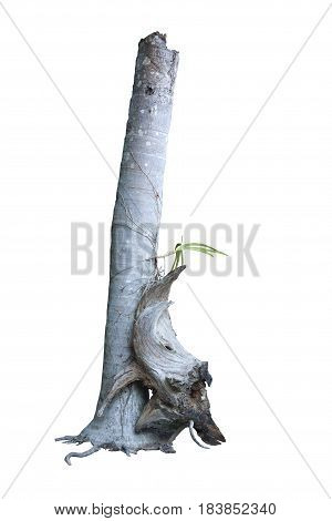 Dead trees can be planted with orchids and dead wood beautifully : with clipping path.