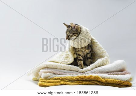 Cat sitting on a knitted things in sharfike