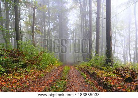 Misty Summer Fores With Foliage.