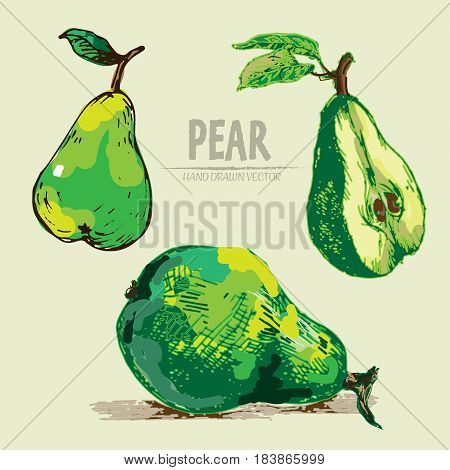 Digital vector detailed color pear hand drawn retro illustration collection set. Thin artistic linear pencil outline. Vintage ink flat style, engraved simple doodle sketches. Isolated objects