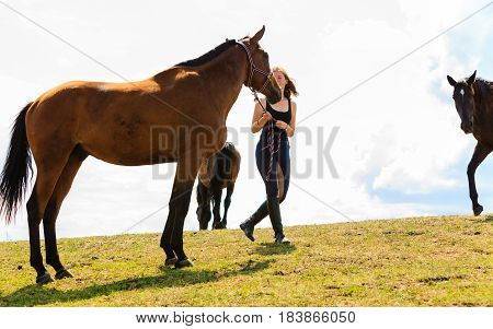 Taking care of animals love and friendship concept. Jockey young girl petting brown horse on sunny day